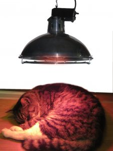 Heating For Pets And Animals